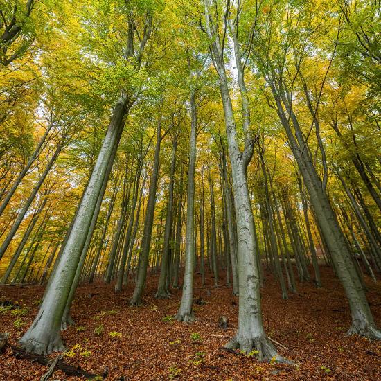 Abychom zachovali <br>odolné a krásné lesy